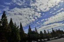 这种树,在韩国经常见。 秋天的云依旧很低,空气也很好。 几个小时的商务谈判,一对三, 可以说稍微达成