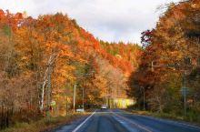北海道·日本  北海道,深秋,秋色,无论跑到哪,都那么美!