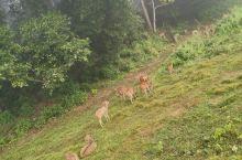 奇特旺国家森林公园里,我寻找回到原始的感觉:1.骑着大象去探险。我看到了犀牛梅花鹿和牛群。2.乘独木