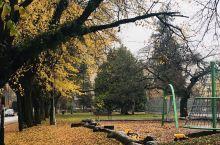 即使飘着深秋的微雨,McBride Park也不觉寒凉,因为,满地金黄的枫叶把它渲染得温馨亲切。儿童