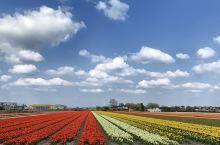 花海窥天堂 A heaven in the flower field