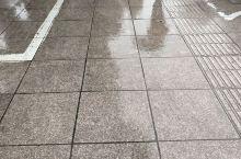 下雨天,可爱的狗狗