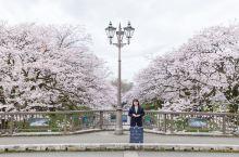 日本小众赏樱地:富山县。正值赏花好时节,如果你在日本升龙道游玩,又刚好会经过富山的话,建议你在这里赏