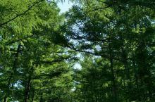 地点介绍:大孤山的天很懒,云已倦,你要的风,吹着你的脸,伸展双臂,感受山岚跳跃,微风浮动,树木芬芳,