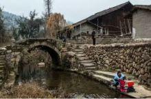 老桥,竹海