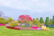 无锡九龙湾花彩小镇的花星球,占地525亩,其中包含英式岩石花园、花王部落、龙梅圣地、玫瑰花园、睡莲花