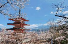 【新仓山浅间公园】不少富士山的名信片在此取景!由新仓山浅间公园望出去会看见富士山和五重塔忠灵塔。春天