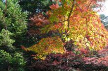 红叶谷公园 位于广岛县的圣地—宫岛的弥山原生树林山谷中。红叶谷公园的红叶自江户时代种植下来,是拥有众