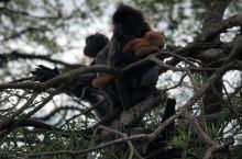 猴子和猴宝宝