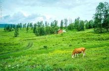 禾木位于新疆北部的布尔津县境内,是一个精致的小山村。来到禾木村,首先映入眼帘的是那一排排小木屋和成群