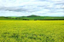 呼伦贝尔牙克石油菜花节,现在正是好时节,距牙克石20公里左右,风景优美。