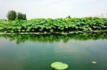 曹县万亩荷塘风景区