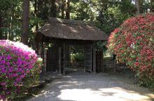 日本三大名园之一:偕乐园。从东京上野坐新干线整一个小时便到。