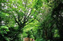 这个自然公园真的太赞了,值得一去 宿舍想要一起来野餐,我与朋友约好来到了木门谷乡村公园。公园里面积很