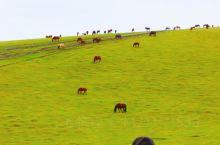 牙克石西40公里·扎罗木得 梦幻般的畜牧小镇