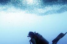 墨宝的沙丁鱼风暴是宿务最有名的景观之一,也是全球难得几乎100%可以保证看得到大群沙丁鱼聚集在近海的