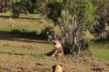 美丽的肯尼亚马赛马拉国家公园保护区动物与自然和谐相处,给人类留下的纯净美丽的净土……