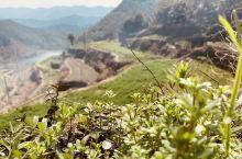 山上的油菜花梯田