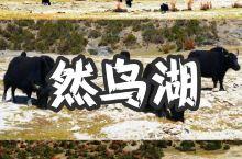 地址:西藏自治区八宿县然乌湖 - 交通:自驾游八宿县 - 线路:县道(悬崖山路) - 秋天的然乌湖就