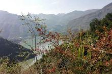 乌江百里画廊的游览是从酉阳县的后坪乡,这里是苦荞之乡出发到码头坐船游览了一段,对面是贵州铜仁的沿河县