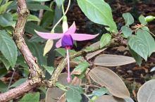维多利亚岛布查特私家花园(三)
