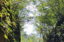 深秋时节却拍出了春天的嫩绿