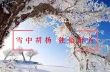 罕见的雪中胡杨,美曝了! 天地苍苍,造物无极。胡杨在漫天飞舞的茫茫大雪中,那样雍容淡然,宁静平和,仿