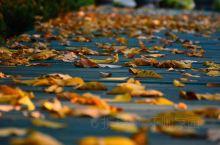 秋风扫落叶!