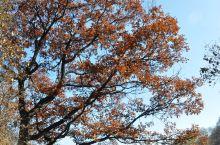 晚秋,只有红褐色了。