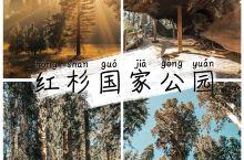 红杉国家公园,走过时间的痕迹  来美国之前,一直觉得红杉国家公园只是一大片参天红杉树,结果走进其中才