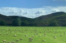 天然的牧场