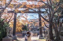 红叶季河口湖小众景点富士御室浅间神社 在红叶季的河口湖,我竟然还能找到这样人少景美还能看富士山的景点