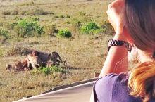 东非马赛马拉大草原上的动物。手机拍摄。