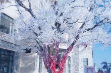 匆匆五日,和老婆领略了冬日之美 从哈尔滨的冰雪大世界,到亚布力的雪场,到雪乡的蘑菇屋,最后在中央大街