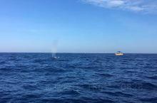 海滩很适合度假,这里的螃蟹很新鲜美味便宜,一大早坐小船乘风破浪来到印度洋深处...一个个巨浪迎面扑来