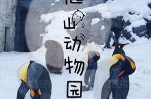 北海道必打卡 旭山动物园里的动物可真可爱呀!  我现在很少去动物园,一方面是去得太多,北方的、南方的
