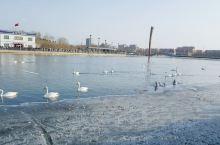 库尔勒一座环境卫生比较干净的城市,人口比较少,冬天温度一般在零下0度左右。 因此库尔勒市内孔雀河里的