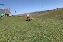 肥肥的懒羊羊