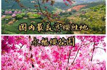 提起国内赏樱花的地方,除了武汉,还有不少小众的景点,比如西安的青龙寺,比如低调登上中国国家地理的福建