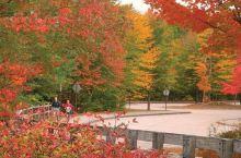 秋天的波士顿,枫景就在家门口。市中心的Boston's Public Garden、查尔斯河上的Th