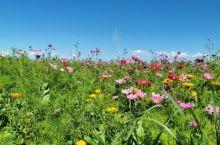 山里的野花很漂亮