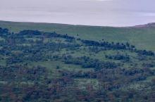 Ngorongoro Crater 是一个直径十二公里圆形○火山口遗址,海拔2200-2300,外沿