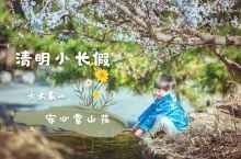 这个清明小长假,去云蒙山安心赏山花! 随着国内疫情形势的好转,春天的脚步也悄然迈入了我们的生活。清明