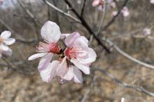 三月春风桃花依旧