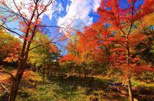 吉林蛟河红叶谷 是长白山余脉老爷岭的一条山谷 这里山势俊秀,林木茂盛 春有绿野、夏有飞瀑、秋有红叶