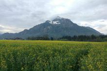 奥地利的旷野,油菜花田,远山。美丽的地方。