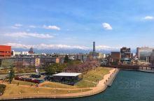 去年4月12日到达富山,樱花已落;今年4月5日到达富山,终于看到了樱花满开!