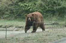 """自驾,前往""""富士野生动物园"""",可以不受时间限制,边跑也近距离看,自己喜欢的动物!"""