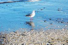 Takapuna Beach. 在奥克兰北岸Takapuna。搭公交车就可以到。有一些我的抓拍,从好