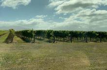 最大的葡萄种植区,连绵几十公里
